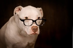 youtube-smart-dog